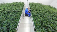 Medical marijuana in Louisiana: Questions about cost arise