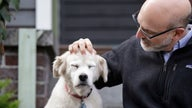 Scientists need 10,000 dogs for the largest-ever study on aging pups