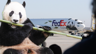 FedEx Panda Express takes off with a very important passenger