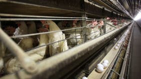 More than $1B in US poultry will head to China, Tyson ready to fly the coop