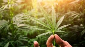 Nevada sees record level of tax revenue from marijuana sales