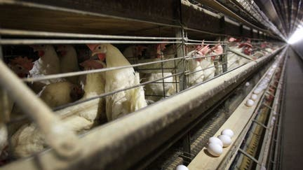 Tyson Foods readies China chicken shipments