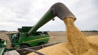 China buys US soybeans after Beijing issues new tariff waivers: traders