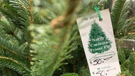 Christmas trees having their 'worst season' as tight supply jacks up price