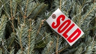 Why Christmas trees cost more this year