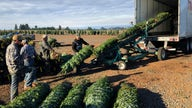 Oregon Christmas tree industry buoyed by immigration workers bill