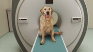 Dogs can count, especially when it comes to treats: study