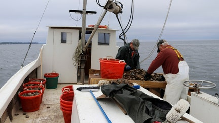 Maryland wants more visas for foreign workers in seafood industry