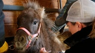Oklahoma program offers rescue for horses, other equine