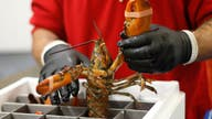 China deal might not bail out lobster industry this New Year