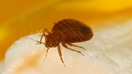 Top 10 bedbug cities: The price you'll pay