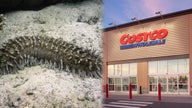 Costco's sea cucumbers sign of global growth opportunity