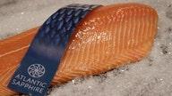 Florida fish farm to take over America's salmon market