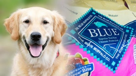 Dog owner hounds 'healthy' food brand, says foul chow made pet fat and sick