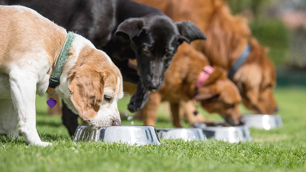 Healthy pet food brands with natural, organic ingredients driving sales