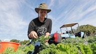Would higher minimum wage be a disadvantage for American farmers?