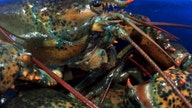 American lobstermen may see relief from steep Chinese tariffs
