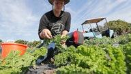 Work authorization for farmworkers will save farms like mine: Fourth-generation Michigan farmer