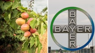 Bayer to appeal jury's $265M verdict for weedkiller's damage to peach farm