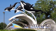 SeaWorld announces plans for Orlando park to reopen. Here's what to expect