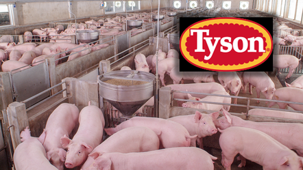 Tyson Foods will shut US pork plant as more workers catch COVID-19