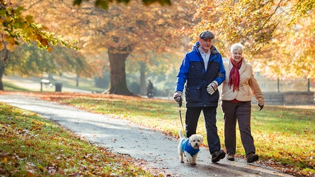 These 4 dividend ETFs are a retiree's best friend