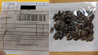 Americans receive mystery seeds in the mail, mostly from China