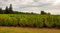 USDA reopens comment period on hemp regulations as lawmakers, growers worry rules could stunt budding industry
