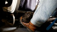 Southwest to ban emotional support animals