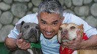Dog behaviorist Cesar Millan on making return-to-office easier on pets: 'Stay calm'