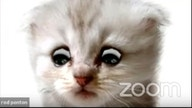 How to use the Zoom cat filter to look like viral feline lawyer