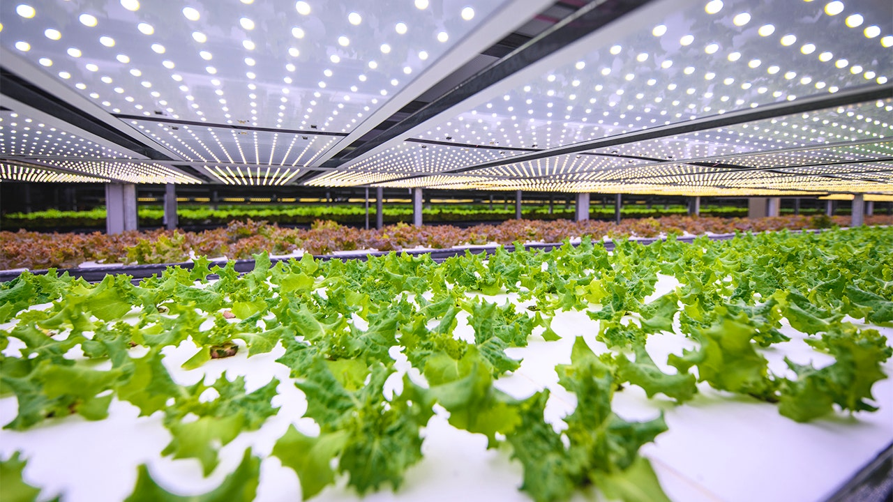 Restaurants, food retailers head indoors for produce amid water shortages and food security concerns