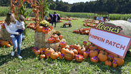 Reese's creates pumpkin patch filled with popular Halloween peanut butter cups