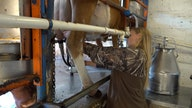 Supply chain disruptions impacting dairy farmers amid ongoing COVID-related issues