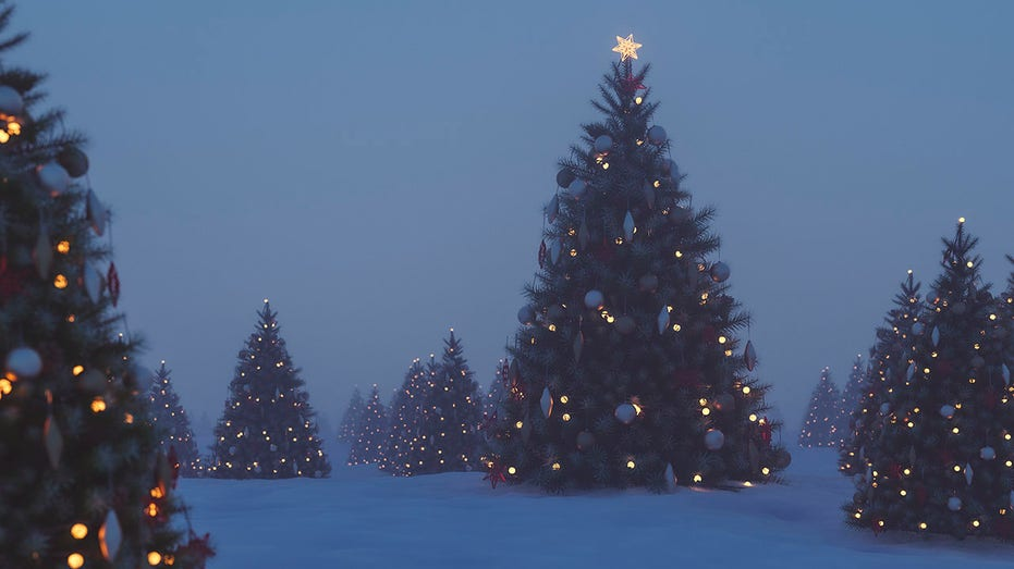 Outdoors Christmas trees at night
