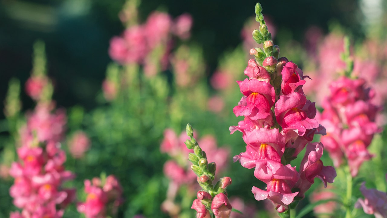5 Easy Flowers To Plant This Spring Fox News