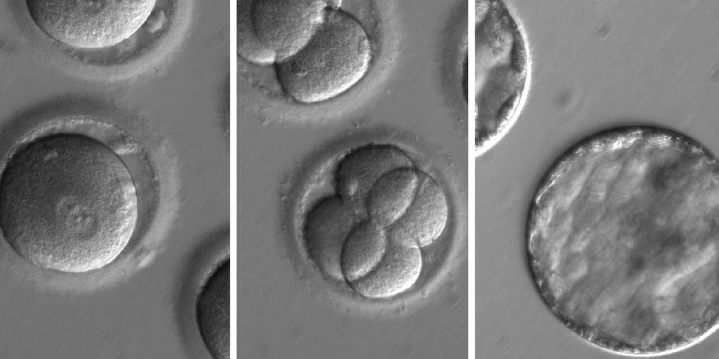 DNA breakthrough: Scientists repair genes in human embryos