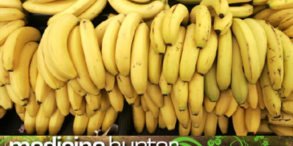 Bananas: The Miracle Fruit   Fox News