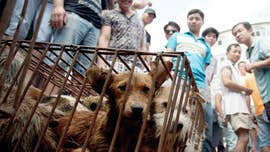 China finally changes status of dogs from 'livestock' to 'pets'