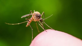 Eastern Equine Encephalitis kills Massachusetts man; 2nd death in state this year