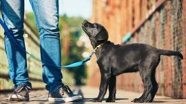 You may be walking your dog wrong, PETA founder says
