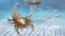 8-foot sea scorpions swam the ocean 500M years ago had massive claws to catch prey