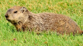 Wisconsin man accidentally shoots golfer, 80, after aiming for woodchuck, police say