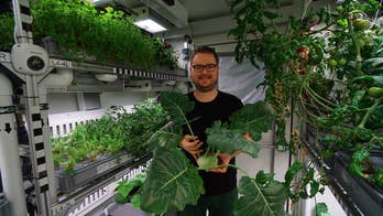 Antarctica greenhouse produces cucumbers, tomatoes and more in Mars-like test