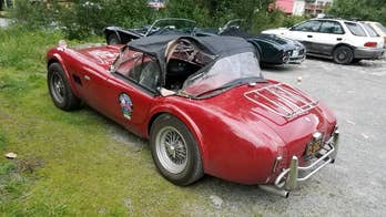 Grizzly attacks cobra in Alaska. Shelby Cobra, that is