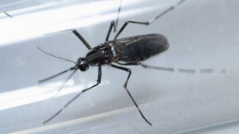 Zika vaccine shows promise in early human trial