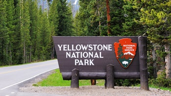 Yellowstone officials investigating man who reportedly shot at wolves