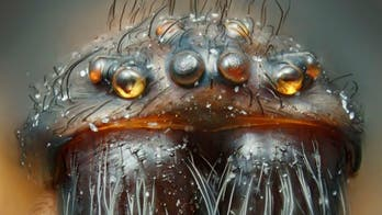 Nikon's Small World Contest 2012: Life as you've never seen it