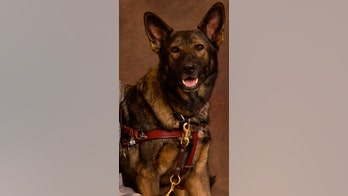 Unsung canine heroes: Dogs that deserve our thanks