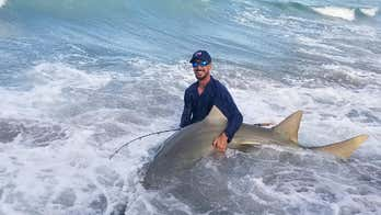 Fisherman hooks 11-foot endangered sawfish off Florida pier, releases it back into ocean